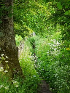 L'Assommoir ... pagewoman: Footpath, nr Kirkby Stephen, Upper Eden Valley, Cumbria, England, by Phil Gates