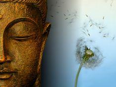Google Afbeeldingen resultaat voor http://sathyasaibaba.files.wordpress.com/2010/06/buddha-wallpapers-photos-pictures-dandelion.jpg