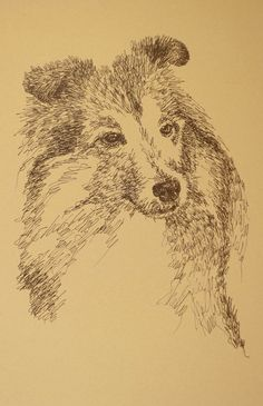 Shetland Sheepdog: Dog Art Portrait by Stephen Kline, art drawn entirely from the words Shetland Sheepdog. He also can add your dog's name into the lithograph. - drawDOGS.com : drawdogs.com His collectors number in the thousands from over 20 countries and every state in the US. Kline's dog art has generated tens of thousands of dollars for dog rescues worldwide. http://drawdogs.com/product/dog-art/shetland-sheepdog-dog-portrait-by-stephen-kline/