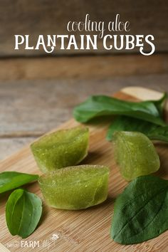 Keep a stash of these cooling Aloe Plantain Cubes on hand to help soothe sunburn, rashes, minor scrapes and other skin irritations. Simple to make and only requires two ingredients!