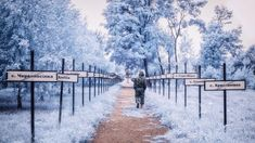 30+ years later: Haunting pictures of Chernobyl in infrared photography  ||  Photographer Vladimir Migutin has given a new meaning to the tragedy with his pictures, using infra-red filters. https://www.hindustantimes.com/art-and-culture/30-years-later-haunting-pictures-of-chernobyl-in-infrared-photography/story-8zwX1DzOdkNG3W1snz6egP.html?utm_campaign=crowdfire&utm_content=crowdfire&utm_medium=social&utm_source=pinterest