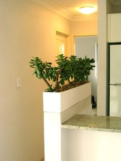 For planter