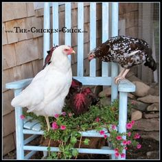 Provide them with a variety of things to roost on and move them around from time-to-time to keep things interesting. By building up, the total square footage available to the flock is increases. Use old chairs Backyard Chicken Coop Plans, Cheap Chicken Coops, Portable Chicken Coop, Best Chicken Coop, Building A Chicken Coop, Chickens Backyard, Chicken Chick, Backyard Ideas, Garden Ideas