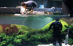 The World's Largest Nature Aquarium Project Takashi Amano x Oceanário de Lisboa - ADA