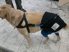 CRADEF- Centro de reabilitação de animais deficientes.  https://www.facebook.com/cradefanimaisdeficientes/ http://cradef.wix.com/cradef http://ortopedia-veterinaria.blogspot.com.br/