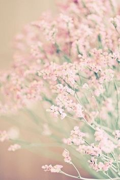 <<<3 Soft Pink Flowers