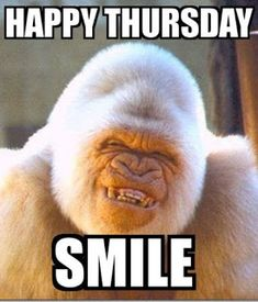 Are you searching for the funniest happy thursday memes for friday motivation right now? Check out the top 10 funny happy thursday memes below. Funny Thursday Quotes, Thursday Meme, Thursday Greetings, Funny Good Morning Quotes, Thankful Thursday, Funny Quotes, Funny Friday, Funny Humor, Tgif Funny