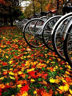 Bicycles and Leaves