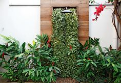 Os jardins verticais são muito utilizados para amenizar a falta de áreas verdes em espaços pequenos, modificando a paisagem do local. Pode ...
