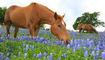 horses>>>>> #cantwaittobedonewithschool