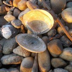 Empty shell in rocks