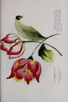 Royal School of Needlework painting with the needle Pinterest More Need...