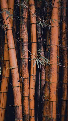 Nature Wallpaper: iPhone Wallpapers Wallpapers for iPhone X iPhone 8 and iPhone 7 Bamboo Wallpaper, Nature Wallpaper, Cool Wallpaper, Mobile Wallpaper, Landscape Wallpaper, Animal Wallpaper, Colorful Wallpaper, Black Wallpaper, Flower Wallpaper