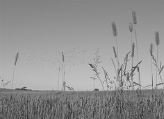 early in the morning the birds fly over the fields and I will see to the weeds