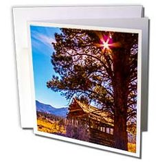 The sun shining through the trees near an old shack and gold meadow Greeting Card