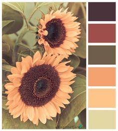 65 ideas kitchen decor themes sunflowers color palettes for 2019 Colour Pallette, Colour Schemes, Color Combos, Wall Colors, House Colors, Sunflower Colors, Sunflower Kitchen, Kitchen Decor Themes, Kitchen Colors