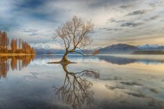 Linda Cutche won third place for this shot of a lone tree in Lake Wanaka, New Zealand