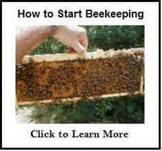 Thinking about beginning beekeeping? Here's a step-by-step guide covering beekeeping basics. Follow along as I order bees, build a beehive, install bees, and show how to manage the hive the first year