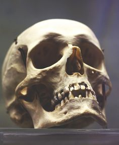 skull by anastasia r, via Flickr