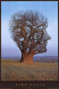 Tree Floyd