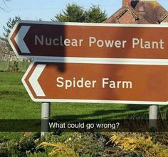 What could go wrong
