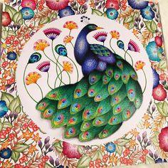 Millie Marotta Coloring Book Fresh Finished Peacock From the Millie Marotta Animal Kingdom Secret Garden Coloring Book, Johanna Basford Coloring Book, Color Pencil Art, Coloring Book Pages, Colorful Drawings, Animal Kingdom, Colored Pencils, Enchanted, Doodles