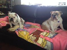 Rocco & Coco
