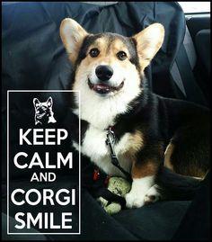Corgi smiles
