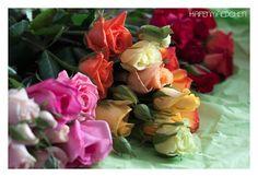 hafenmaedchen: Freilandrosen #2flowergirls