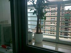 New plant in da house