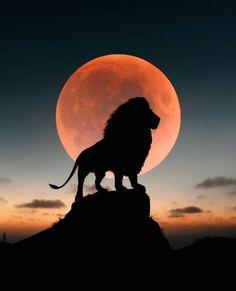 Such a powerful shot of a proud male lion . Art Roi Lion, Lion King Art, Lion Art, Lion Images, Lion Pictures, Lion King Photos, Lion Photography, Afrique Art, Lion Wallpaper