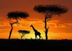 Stunningly beautiful. I have dreamed of going on a African safari, especially if I could do it with my good friends who have a special passion for Africa. I would love to see something like this in person and get to experience the African culture!
