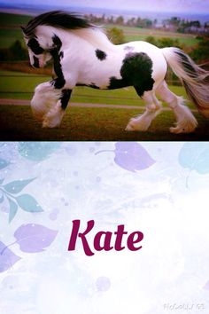 Name: Kate Breed: Gypsy Vanner Gender: Mare She is very beautiful and mysterious. She doesn't like to have close friends. What could be going on?
