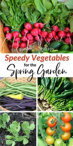 Speedy Vegetable for