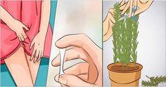 Limpa vagina, elimina fungo trata cisto | Receita Naturais