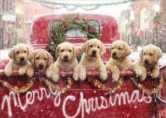 Lab Puppies, Cute Puppies, Cute Dogs, Retriever Puppies, Dog Lab, Dalmatian Puppies, Puppy Husky, Teacup Puppies, Labrador Retrievers