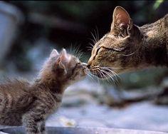 gatos besandose #gatos #kiss #kat