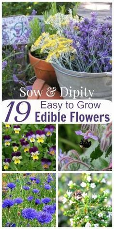 19 Edible Flowers, put them in soups and salads and impress your guests!
