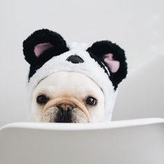 """Good morning"", the French Bulldog Panda ; }"