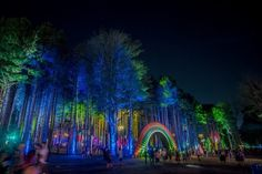 MICHIGAN ~ Electric Forest Festival in June each year is June This gallery is from the Art of Electric Forest Electric Forest, Forest Festival, Michigan, Raves, Festivals Around The World, Trance, Installation Art, Oh The Places You'll Go, Around The Worlds