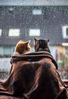 cats watching the rain