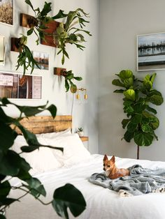 Midcentury Modern Lighting Giveaway as part of this Cozy Jungle Bedroom Makeover - a lot of greenery, reclaimed wood, and a little touch of elegance with those gorgeous sconces   Probably This