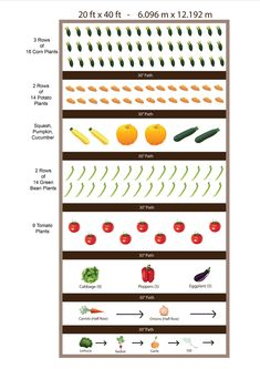 Planting your vege garden