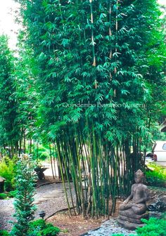 how to keep bamboo from spreading