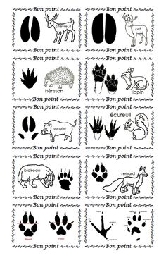 jugelowend - 0 results for science Kindergarten Activities, Educational Activities, Preschool, Animal Coverings, Teaching Displays, Animal Footprints, Mushroom Crafts, Bon Point, Snow Theme