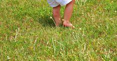 Grasmilben können auf dem Rasen massenhaft auftreten und verursachen mit ihrem Biss rötliche Pusteln, die tagelang jucken. Wir geben Tipps zur Bekämpfung der lästigen Spinnentiere.