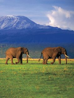 6 Places to Go Before You Have Kids These destinations are too sexy, too adventurous and too faraway for tikes. So enjoy them now! via amarchese Tanzania, Kenya, Oh The Places You'll Go, Places To Travel, Places To Visit, Elephas Maximus, Les Continents, Elephant Love, Thinking Day