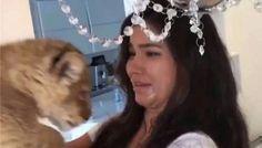"""Una modelo pretendió recrear una escena de El Rey León: Simba se """"vengó"""" y le orinó la cara: Sveta Bilyalova, modelo de ropa interior,…"""