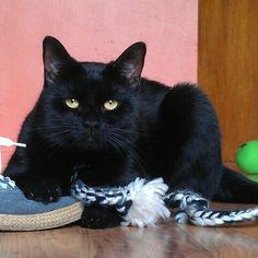 Mine World Domination, Cats, Animals, Gatos, Animales, Animaux, Animal, Animais, Kitty