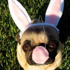 Etsy bunny costume
